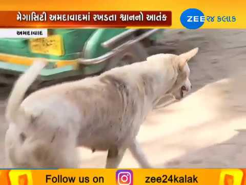 Terror of Stray Dogs in Ahmedabad | Zee 24 Kalak