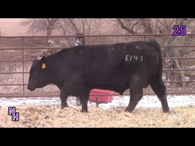 New Haven Angus Lot 25