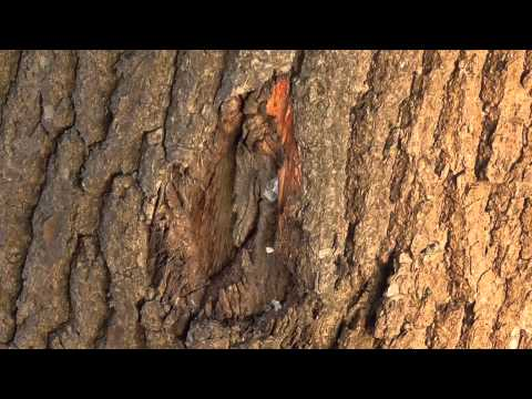 dying-trees-fryslan