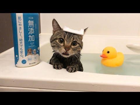 お風呂が好きすぎて1人で湯舟につかってリラックスする猫w