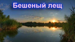 Русская Рыбалка 3 9Онлайн№3 Зароботок для новичков  Белый амур