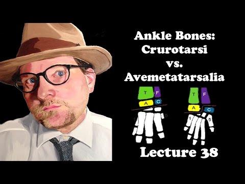 Lecture 38 Ankle Bones: Crurotarsi vs. Avemetatarsalia