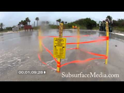 Sea Turtle Nest Destroyed by Tropical Storm Debby - June 24, 2012