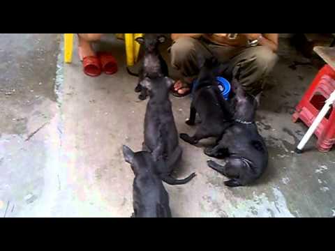 thả bánh cho chó cắn nhau ;) - SDT: 01223386268