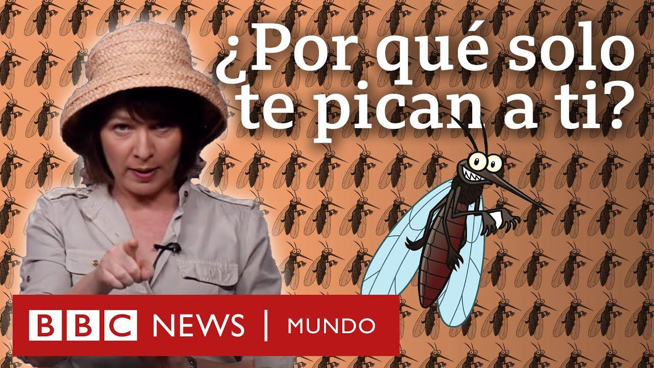 cuanto vive un mosquito macho