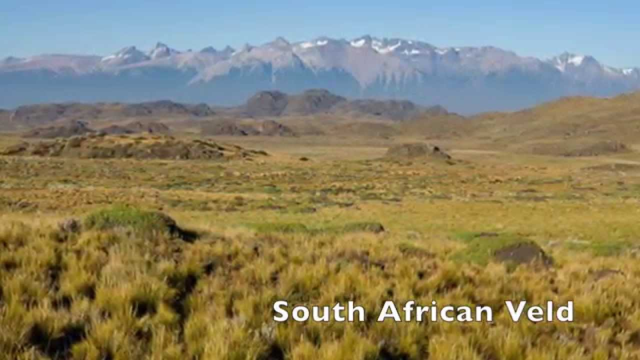 Temperate Grasslands - YouTube