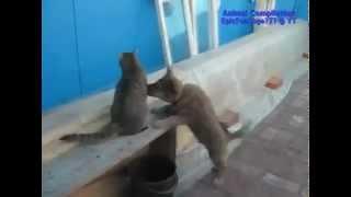 Подборка приколов с животными))Очень смешная)))2012