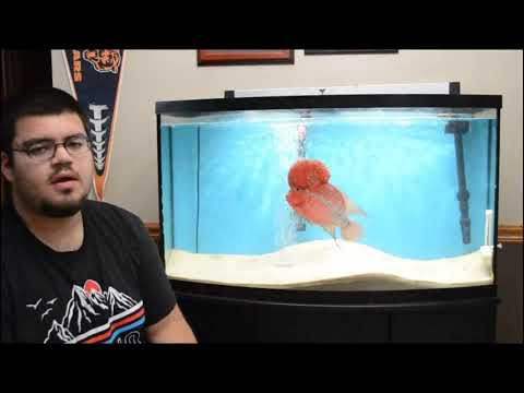 FlowerHorn Care And Info | Complete Guide