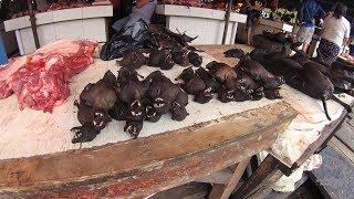 Pasar Extreme Beriman Codot Kelelawar Paniki Part.1 Tomohon dekat Manado Sulawesi UtaraYDXJ0463