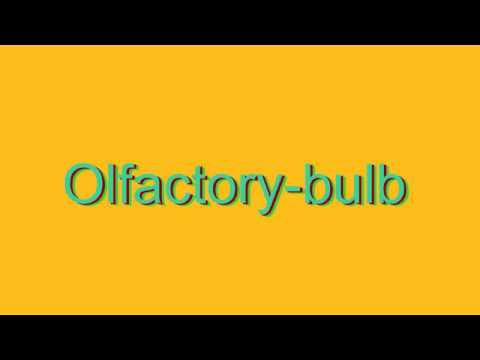 How to Pronounce Olfactory-bulb