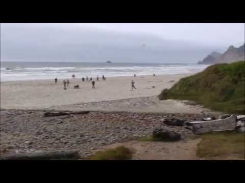 Thrifty Trips - Lincoln City, Oregon: Seagull Food Fights, Cool Museums, and Adorable Beach Guests