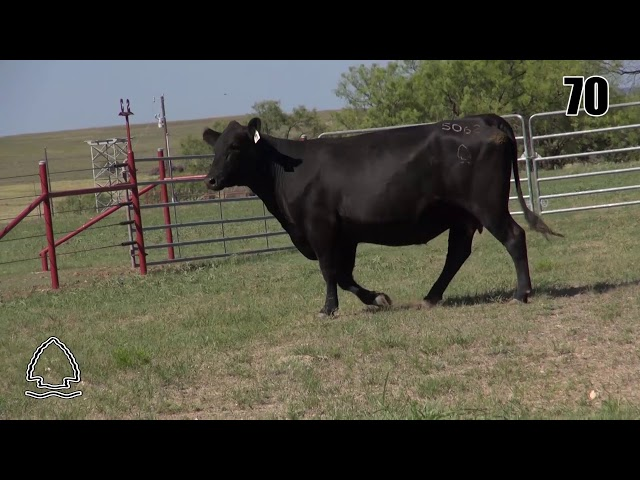 Pearcy Angus Ranch Lot 70