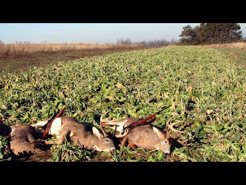 Easy No Till Brassica Food Plots