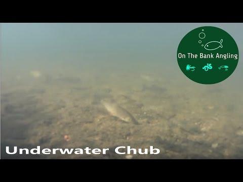 UNDERWATER CHUB FISHING!!! - BRISTOL AVON