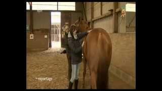 Ein Herz für ausrangierte Pferde