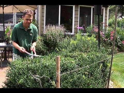 How to Prune Hedges Evenly