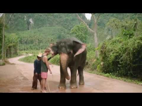 Facebook - Tour Guides (Thailand)