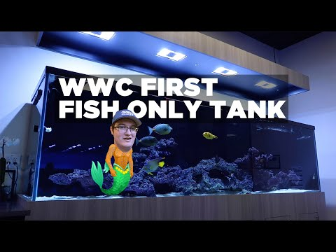 Guided Tour Of The Fish Only Tank With Joe - World Wide Corals