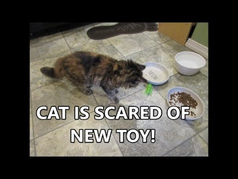 CAT IS SCARED OF NEW TOY