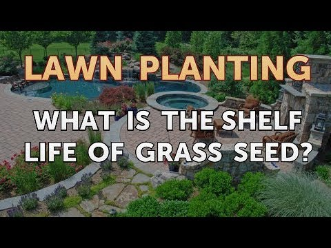 What is the Shelf Life of Grass Seed?