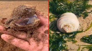 Талантливый рыбак ловит морских глубоководных существ EP39
