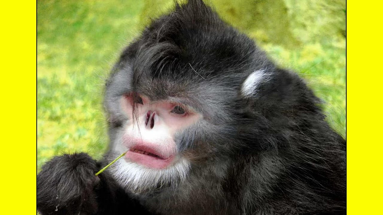 World's first MONKEY-HUMAN HYBRID grown in Chinese Laboratory | August 2019 NEWS