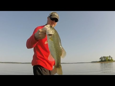 Catching PIGS on Clarks Hill Bass Fishing