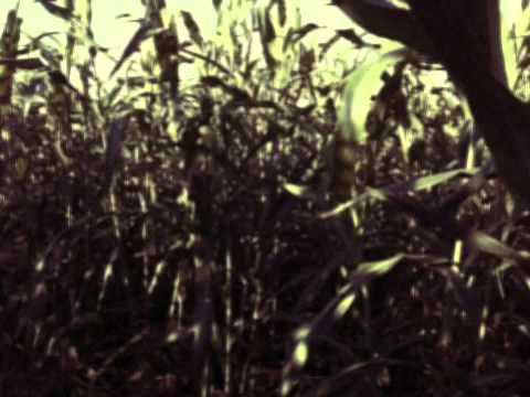 Corn Maze - Hondo Texas