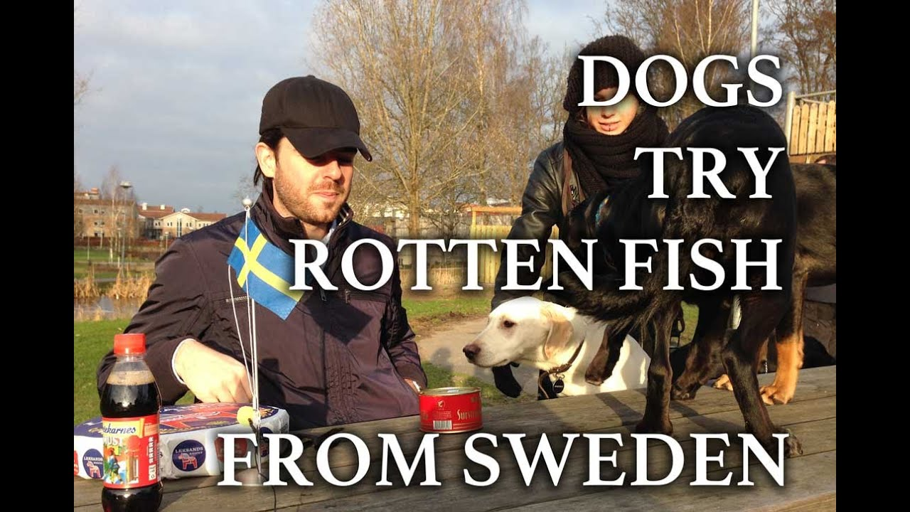 Ikea Hej Dogs Smell Stinky Fish From Sweden: Surströmming (long