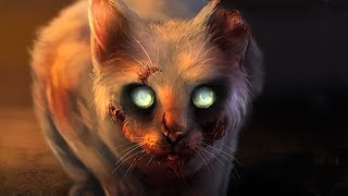 Why We Should not Look into the Eyes of the Cat for a Long Time!