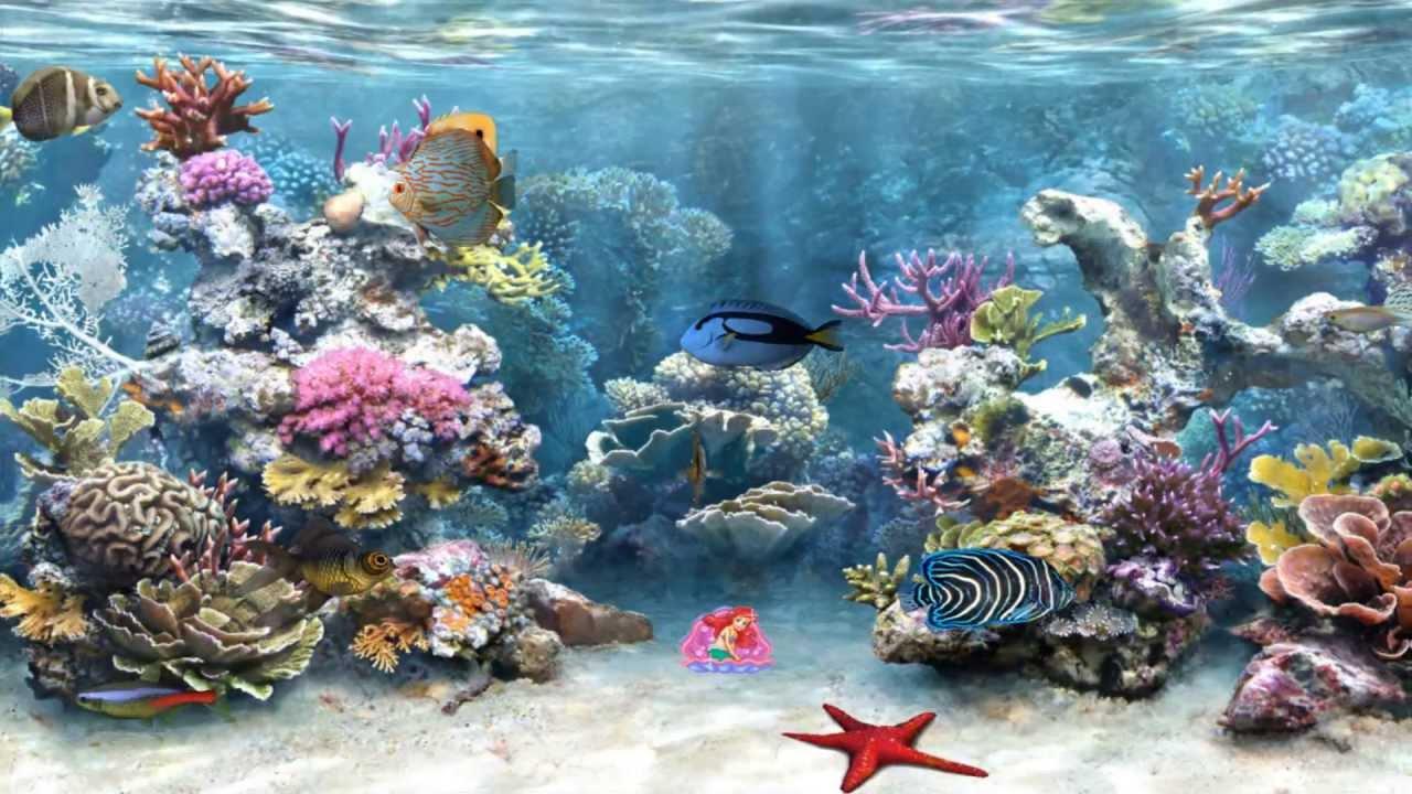 Clear aquarium screensaver youtube - Fish tank screensaver pc free ...