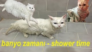 Banyo Yapan Kedi ( Cat taking a shower )