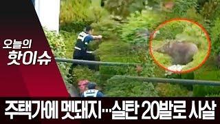부산 주택가 출몰한 100kg 멧돼지…실탄 20발 발사해 사살   뉴스A