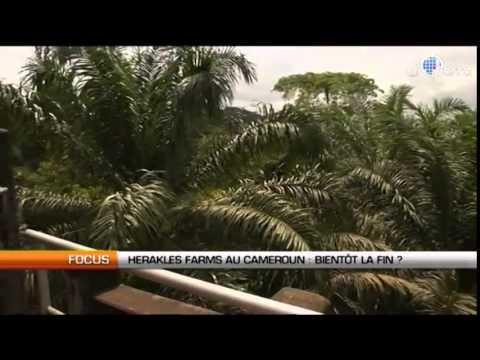 Herakles Farms au Cameroun : les mensonge complices !