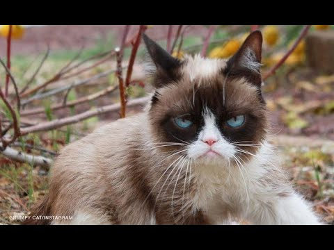 Grumpy Cat, the grouchy-faced furball that launched a thousand memes, is dead