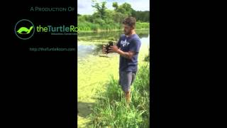 Turtle Expert's First Time Catching His Favorite Species