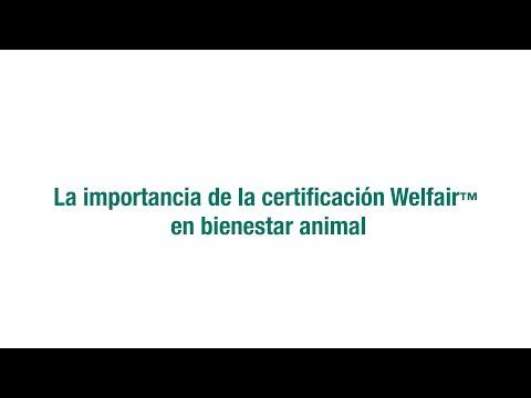 Pareja rusa rescata osos recién nacidos from YouTube · Duration:  3 minutes 42 seconds