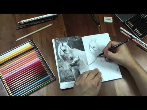Pferde zeichnen mit Praxis Zeichnen, Übungsbuch 11