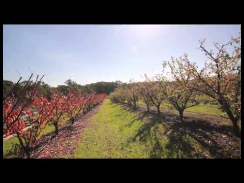 Rayners Orchard - Melbourne's Yarra Valley