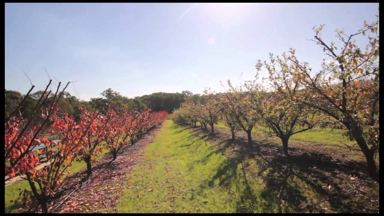 Melbourne orchards