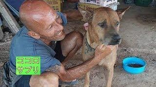 タイに住むフランス出身の動物保護活動家は、路上で野良犬を発見します...