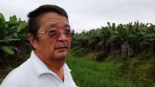Robson Hayashida - another view at the farm