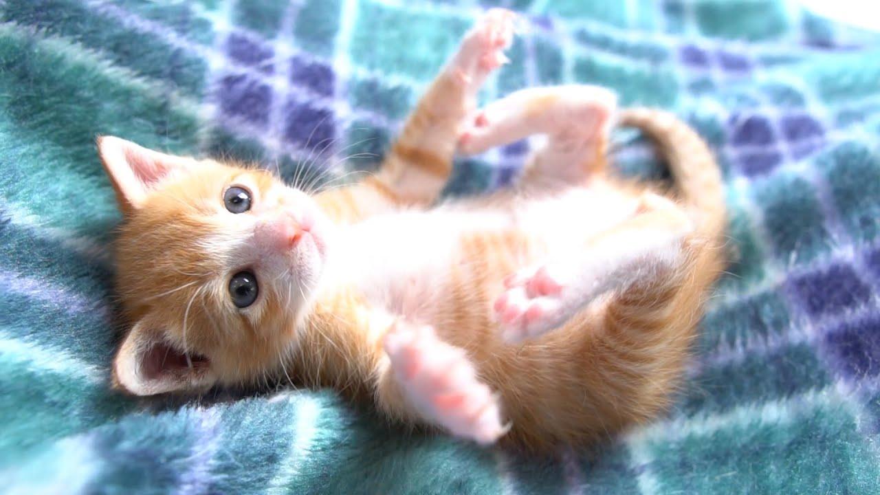 ミルク いつまで 子猫