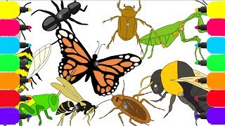 How to draw an insects, butterfly, bug, ant, bee, wasp, cockroach, housefly