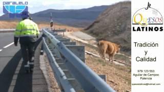Una improvisada capea para agentes de trafico de la Guardia Civil  de Palencia