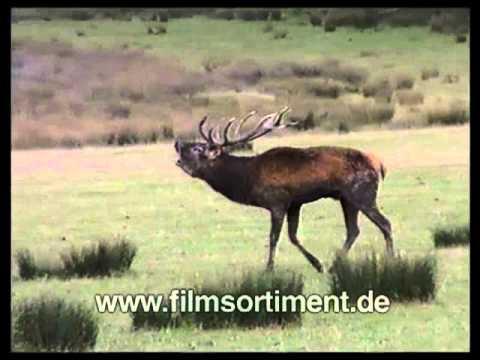 biologie fortpflanzung und entwicklung bei wirbeltieren ii dvd vorschau youtube. Black Bedroom Furniture Sets. Home Design Ideas