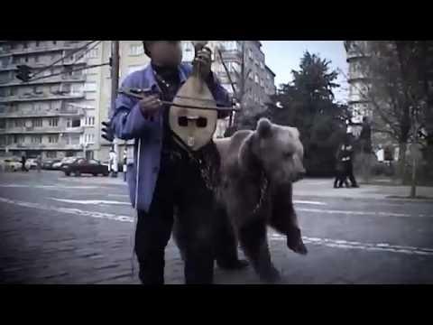 Saving dancing bears – 10 Years of FOUR PAWS