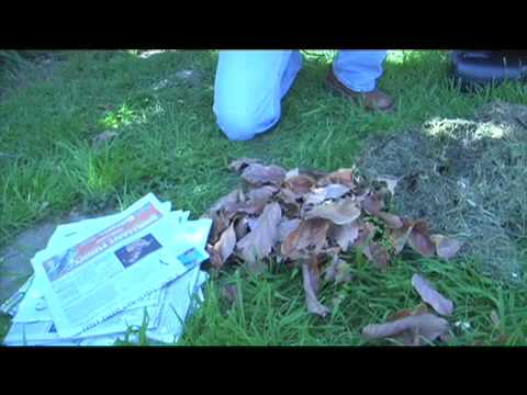 Learn to Compost in Your Backyard - A Sierra Club Green Tip