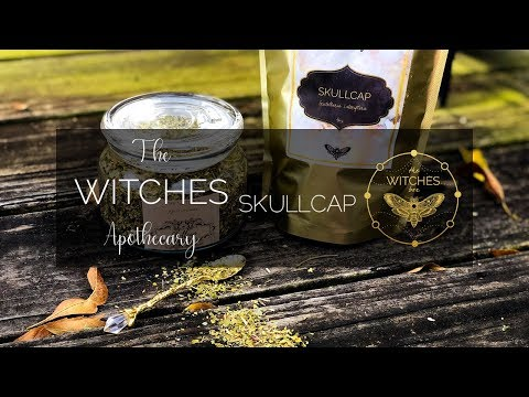 The Witches Apothecary: Skullcap Herb - YouTube
