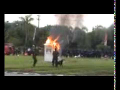 VIDEO DOKUMENTASI K-9 PT. DAS SURABAYA (part 1)